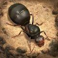 模拟地下蚁国