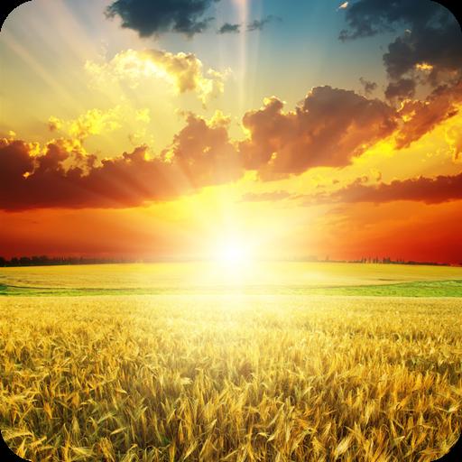 阳光高考网app
