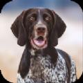 猎犬模拟器游戏安卓版