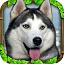 流浪狗模拟